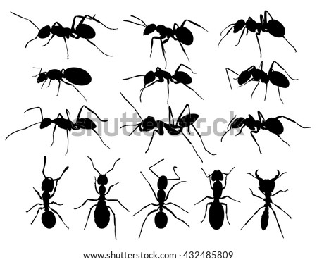 silhouettes of ants.