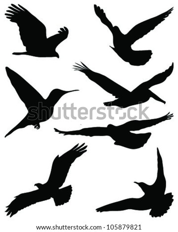 Silhouettes of birds in flight