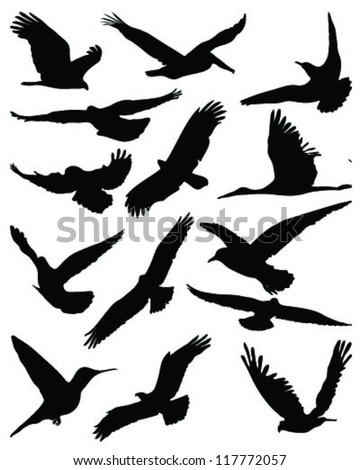 Silhouettes of birds in flight-vector