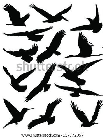 Silhouettes of birds in flight-vector