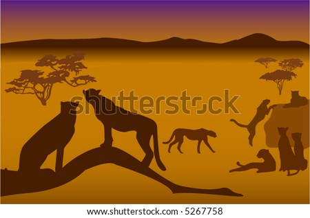 silhouettes of cheetahs in