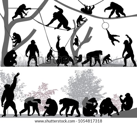Silhouettes of chimpanzees and its cubs outdoors