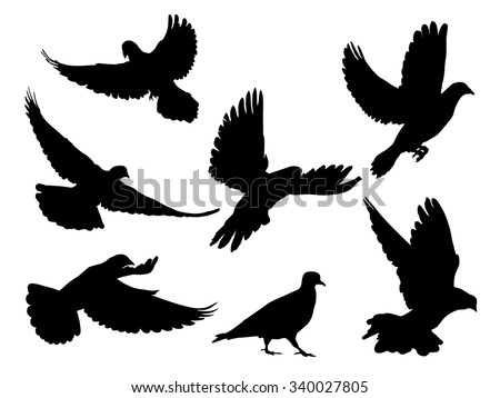 silhouettes of doves in many