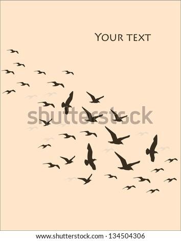 silhouettes of flying birds, vector illustration