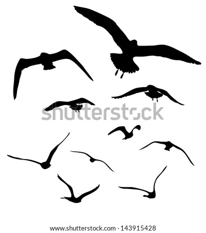 silhouettes of seagulls 2