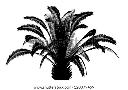silhouettes of the coconut trees