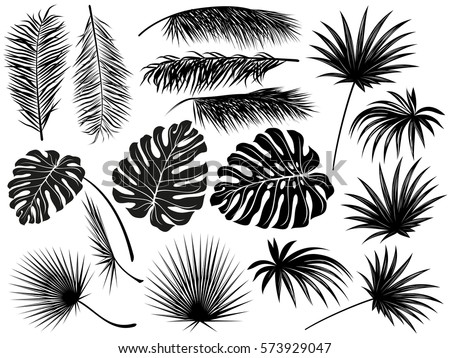 Silhouettes of tropical  leaves (coconut palm, monstera, fan palm, rhapis). Set of hand drawn vector illustrations on white background.