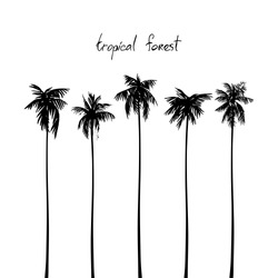 Silhouettes of tropical palms. Vector image isolated on white.
