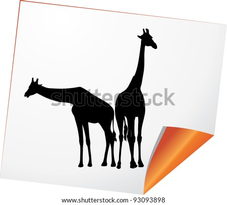 Silhouettes of two giraffes on a paper. Vector