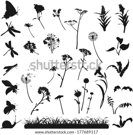 silhouettes of various flowers