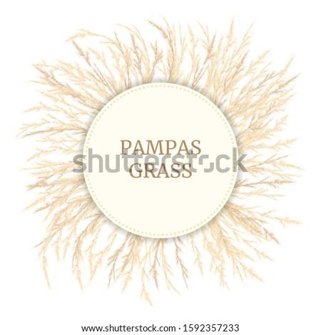 silver golden pampas grass card