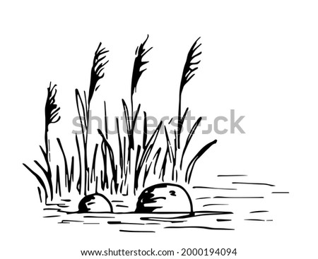 Simple hand-drawn vector drawing in black outline. Lake shore, reeds, stones in the water, bumps, swamp. Nature, landscape, duck hunting, fishing. Ink sketch. Foto stock ©