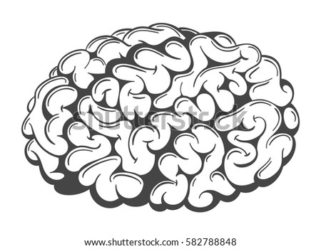 Simple hand drawn vector human brain. Graphic sketchy brain isolated on white.