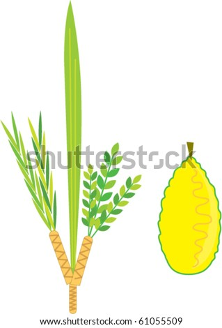 Lulav And Etrog Clipart Simple lulav and etrog - sukkot - stock vector ...