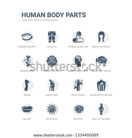 simple set of icons such as ball of the knee, basophil, big cellule, big lips, blood supply system, blood vessel, bones joint, bosom, brain body organ, brain inside human head. related human body
