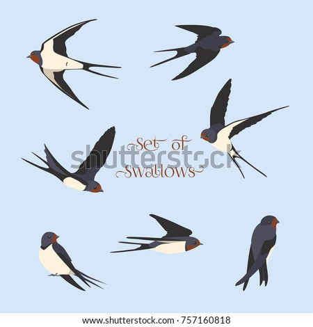 simple swallows on a light blue