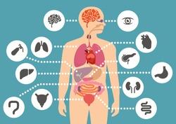 simulation of human internal organ anatomy simple flat color design with human organ icon set