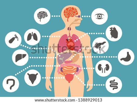 simulation of human internal organ anatomy simple flat color design with human organ icon set
