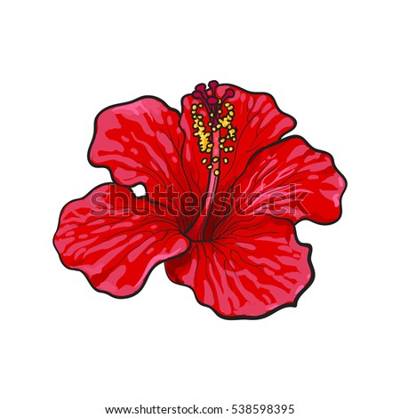 free stock photo of red tropical flower on black background, Beautiful flower