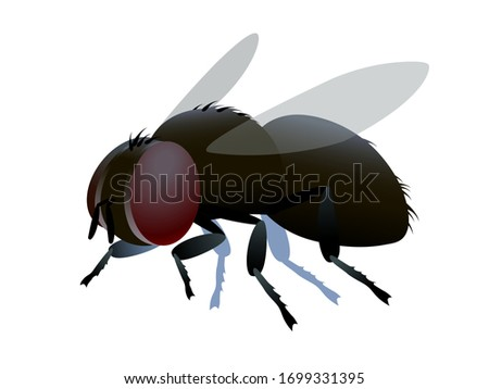 single dirty brown ugly dung fly with bristles & faceted eyes. logo or emblem, infection symbol. color vector illustration isolated on a white background in cartoon or clip art style