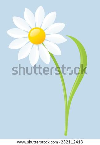 Single white daisy on blue background.