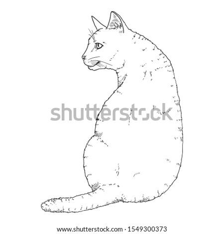 Sitting Cat. Vector Black Sketch Feline Illustration