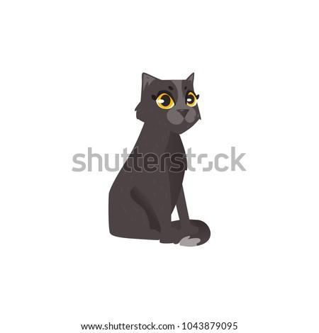 sitting cute fluffy black cat