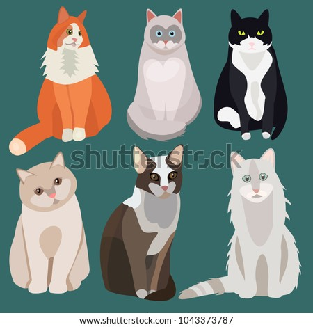 sitting cute vector cats white