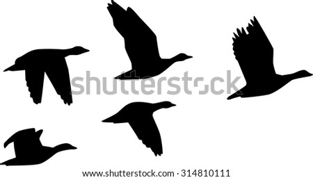 Six flying geese