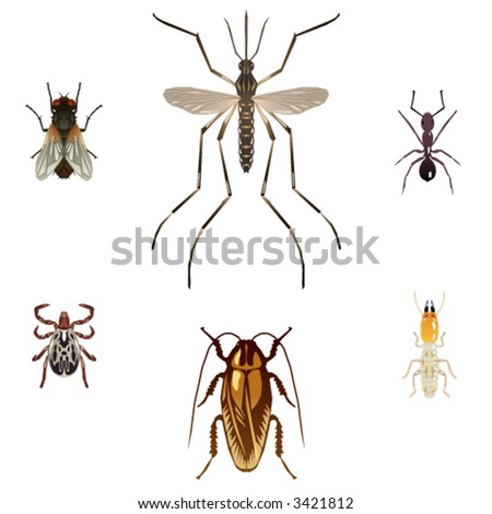 Six vector illustrations of pest insects: housefly, mosquito, ant, tick, cockroach and termite