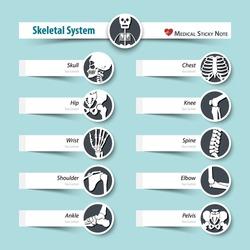 Skeletal System . medical sticky note style . flat design .
