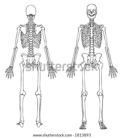 Skeleton Front and Back - VECTOR