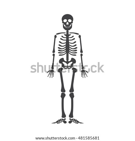 Skeleton human anatomy. Vector halloween black skeleton isolated on white.