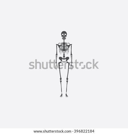 skeleton icon vector skeleton