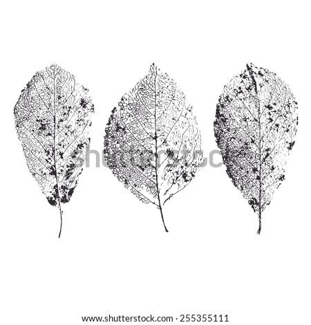 skeleton leaves isolated leaf