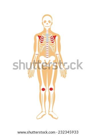 Skeleton. Vector flat illustration  stock photo