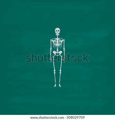 skeletons   human bones icon