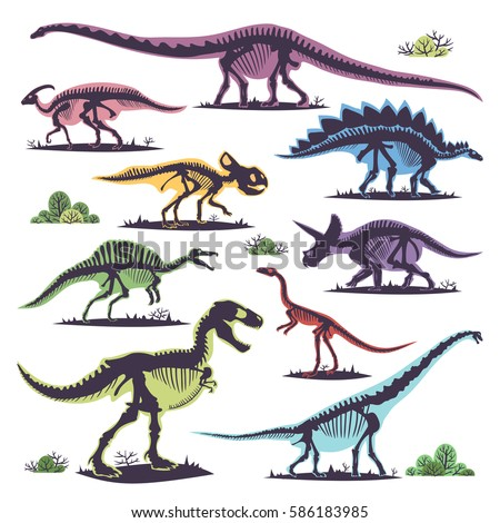 skeletons of dinosaurs