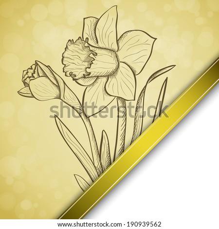 sketch  daffodil background