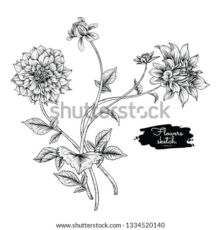 Sketch Floral Botany Collection. Dahlia flower drawings. Black and white with line art on white backgrounds. Hand Drawn Botanical Illustrations.Vector. #1334520140