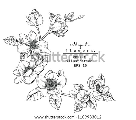Sketch Floral Botany Collection. Magnolia flower drawings. Black and white with line art on white backgrounds. Hand Drawn Botanical Illustrations.Vector. #1109933012