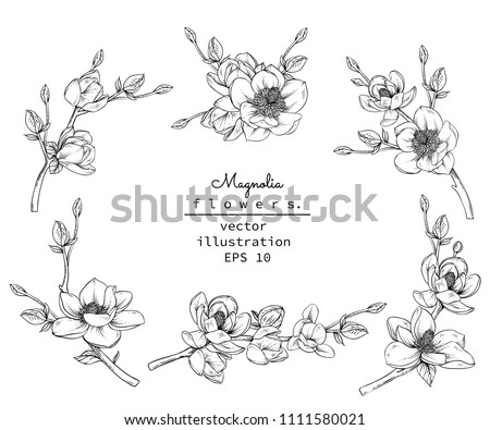 Sketch Floral Botany Collection. Magnolia flower drawings. Black and white with line art on white backgrounds. Hand Drawn Botanical Illustrations.Vector. #1111580021