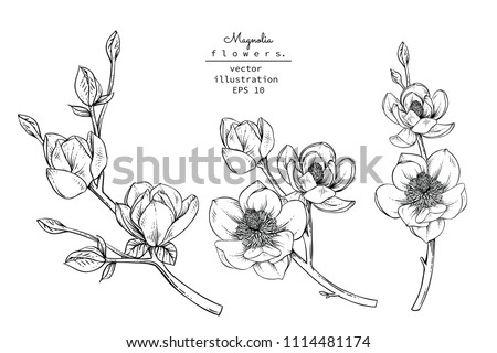 Sketch Floral Botany Collection. Magnolia flower drawings. Black and white with line art on white backgrounds. Hand Drawn Botanical Illustrations.Vector. #1114481174