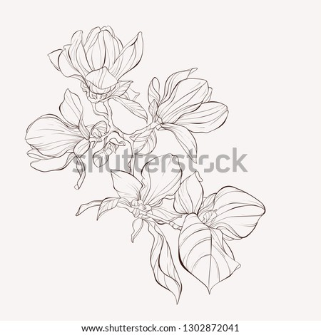 Sketch Floral Botany Collection. Magnolia flower drawings. Black and white with line art on white backgrounds. Hand Drawn Botanical Illustrations.