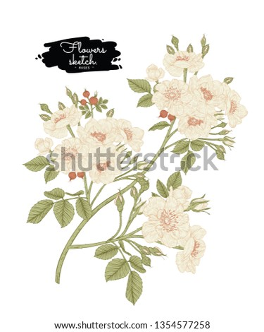 Sketch Floral Botany Collection. Rose flower drawings. Beautiful line art on white backgrounds. Hand Drawn Botanical Illustrations.Vector.