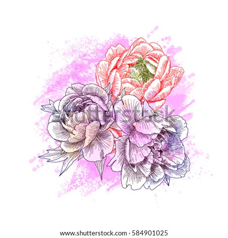 Sketch flowers peony closeup. Hand drawn illustration isolated on white background. Vector. #584901025