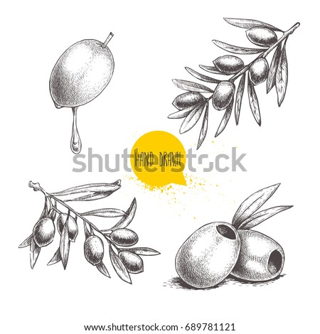 Sketch hand drawn olives set. Olive fruit with oil drop, boneless olives and olive branches with leaves. Vector illustration isolated on white background.