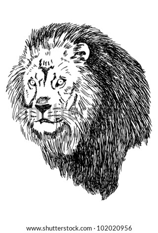 Sketch illustration of lion head