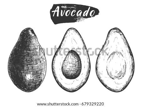 sketch ink vintage avocado set  ...