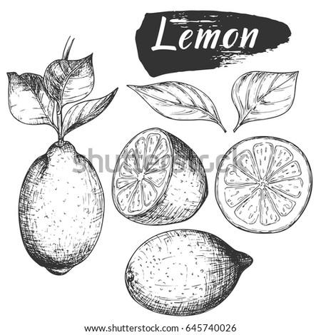 sketch ink vintage lemon set